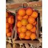 Caja de Naranjas Ecológicas 15kg Navel Powell